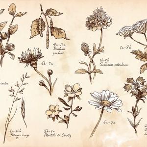 Un peu de botanique
